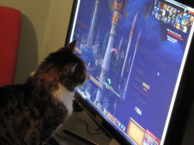 Chat et World of Warcraft