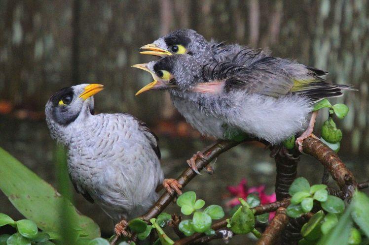 Chicane d'oiseaux