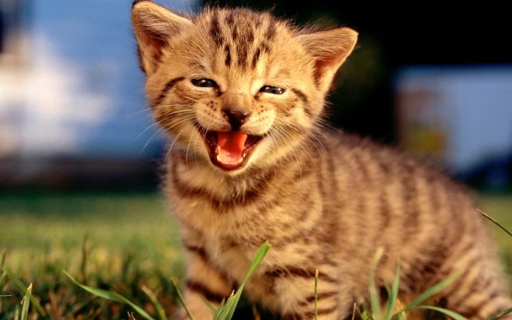 Chat heureux