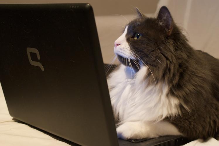 Chat et ordinateur