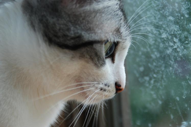 Raoul à la fenêtre