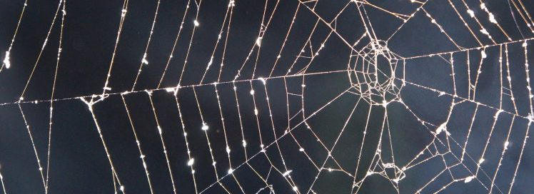 cobweb-1644984_1920