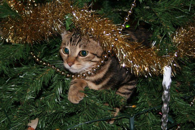 Le chat et Noël