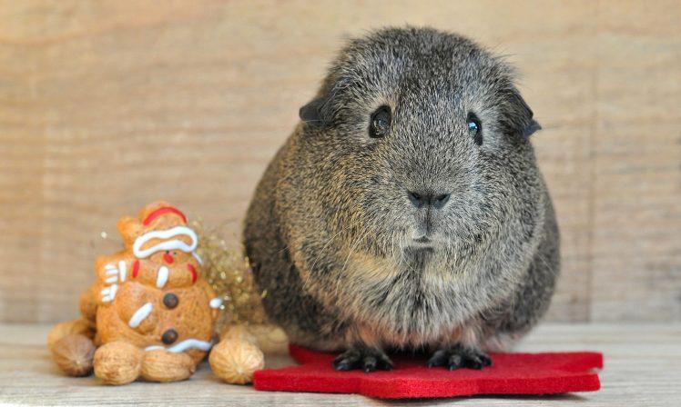Un cochon pour Noël