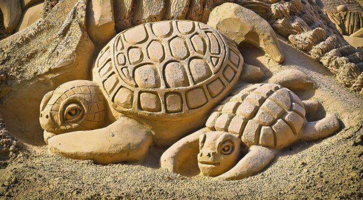 Des bébés tortues?