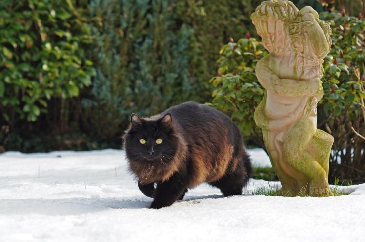 Le chat de l'ange