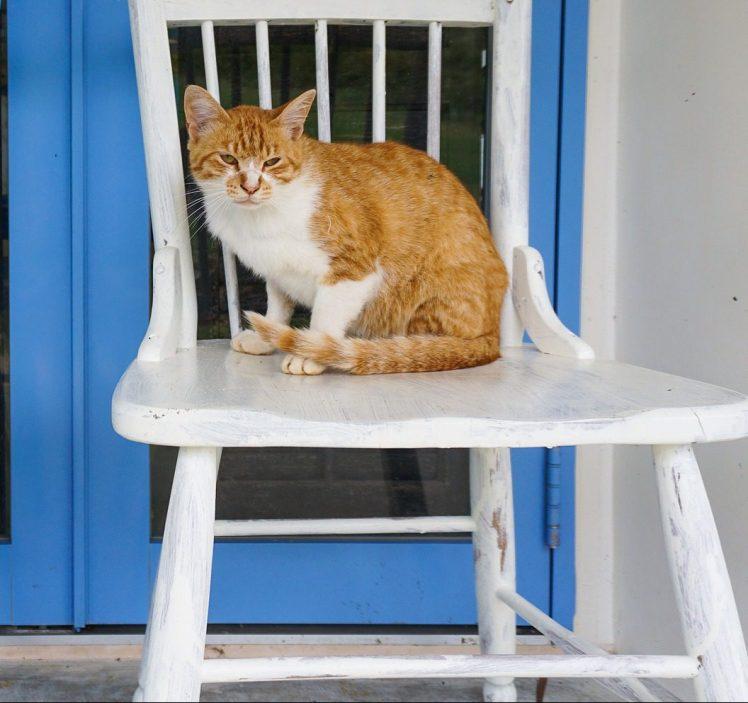 Raoul sur la chaise