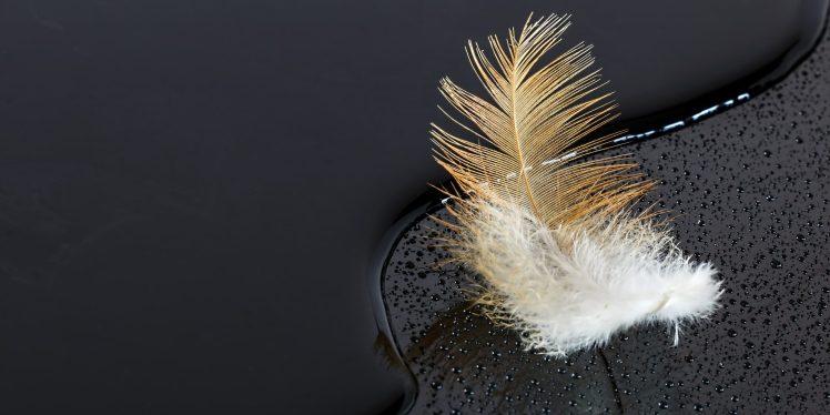 Plein les plumes