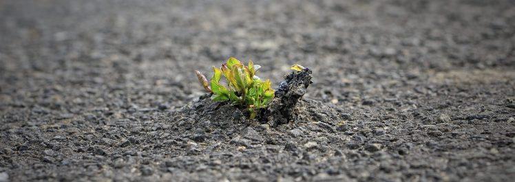 La nature est forte